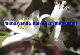 07-polinasyonda bal arılarının önemi