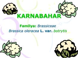 Karnabahar 1