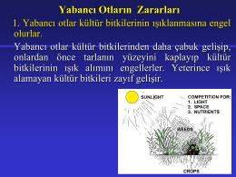 (Bitki Koruma) - Miran Tarımsal Danışmanlık