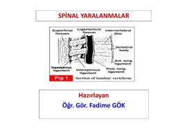 spinal otomatizm