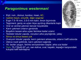 6.Paragonimus.Paramphistomum