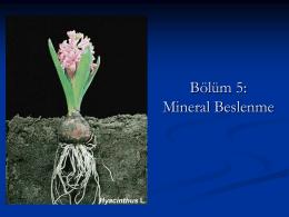 Mineral Besinlerin Sınıflandırılması