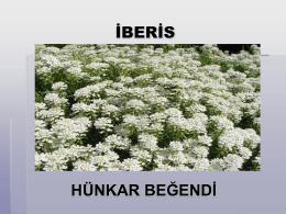 İBERİS - Plant Media