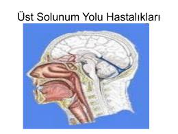 Solunum-Sistemi