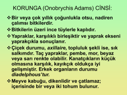 Korunga (Onobrychis L.) Cinsi