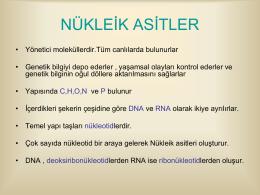 DNA-ve-RNA-protein-sentezi