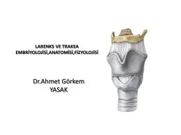 LARENKS ANATOMİSİ