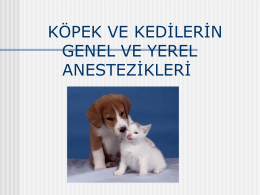 köpek ve kedilerin genel ve yerel anestezikleri
