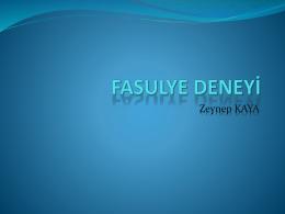 fasulye-deney-aumldeg-