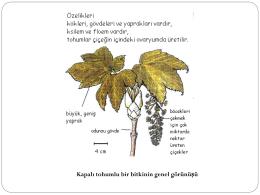 Tohumlu Bitkilerin Genel Özellikleri - Uskudar TAB