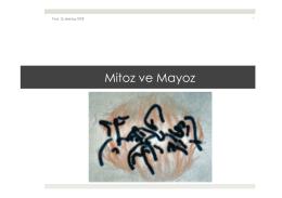 2. Mitoz ve Mayoz.pptx - Prof. Dr. Bektaş TEPE