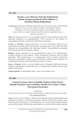 Serpula lacrymans (Kuru Çürüklük Mantarı)