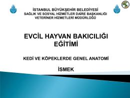 Abdomen - İstanbul Büyükşehir Belediyesi