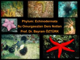 echınodermata sunumu - Su Ürünleri Fakültesi