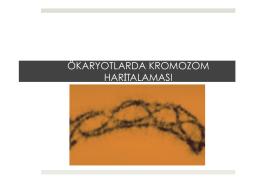 BÖLÜM 7: Ökaryotlarda Kromozom Haritalaması