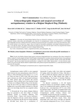 Echocardiographic diagnosis and surgical correction of