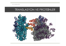 14. Translasyon ve Proteinler.pptx