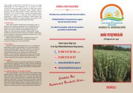 Kekik Yetiştiriciliği - Denizli İl Gıda Tarım ve Hayvancılık Müdürlüğü