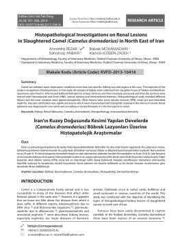 Renal - ResearchGate