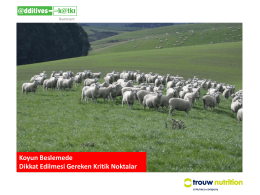 Koyun Beslemede Dikkat Edilmesi Gereken Kritik Noktalar