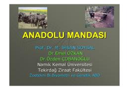 anadolu mandası - İstanbul Manda
