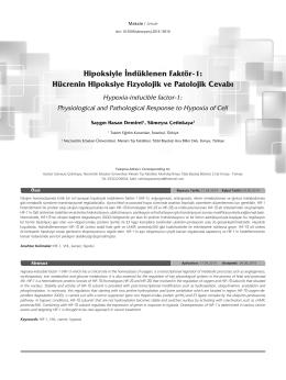 Hipoksiyle İndüklenen Faktör-1