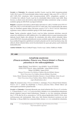 PC–040 Antepfıstığı anaçlarının (Pistacia terebinthus, Pistacia vera