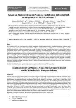 Investigation of Contagious Agalactia by Bacteriological and PCR