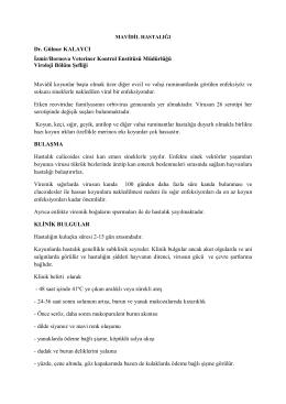 Dr. Gülnur KALAYCI İzmir/Bornova Veteriner Kontrol Enstitüsü