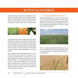 buğday ıslahı birimi