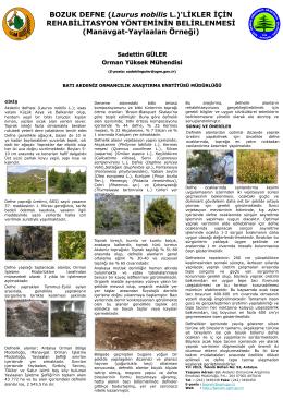 Bozuk Defne (Laurus Nobilis L.) - Batı Karadeniz Ormancılık