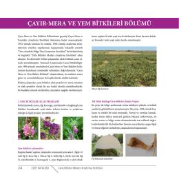çayır-mera ve yem bitkileri bölümü
