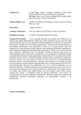 Eşme Ayva (Cydonia oblonga Mill.)