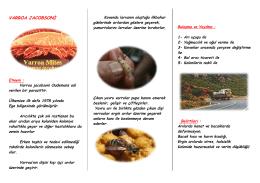 varroa jacobsoni - Ankara İl Gıda Tarım ve Hayvancılık Müdürlüğü