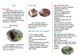 Arılarda Yağma ve Oğul - Ankara İl Gıda Tarım ve Hayvancılık