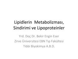 Lipidlerin Metabolizması, Sindirimi ve