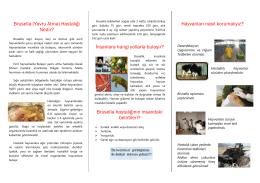 Brusella (Yavru Atma) - Ankara İl Gıda Tarım ve Hayvancılık