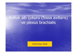Koltuk altı çukuru (fossa axillaris) ve plexus brachialis