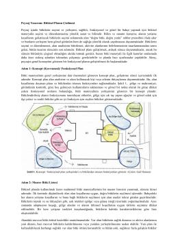 peyzaj tasarımı_bitkisel planın çizilmesi