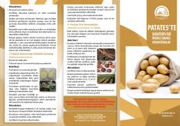 Patateste Karantinaya Tabi Önemli Zararlı Organizmalar