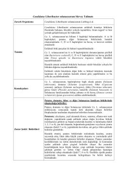 Candidatus Liberibacter solanacearum Sürvey Talimatı