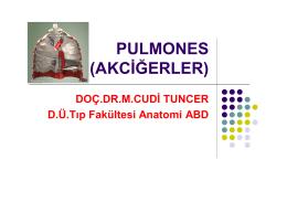 PULMONES (AKCİĞERLER)