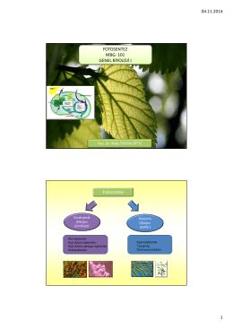 MBG 111 Biyoloji I Fotosentez Aydınlık Evre
