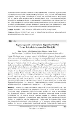 Heteroptera: Lygaeidae