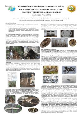 Formica rufa L. - Batı Karadeniz Ormancılık Araştırma Enstitüsü
