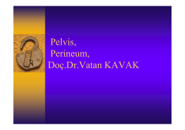 Pelvis, Perineum, Doç.Dr.Vatan KAVAK