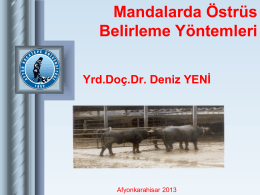 Mandalarda Ostrus