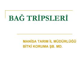 BAĞ TRİPSLERİ Bağ Tripsi (Anaphothrips vitis) Asma Tripsi