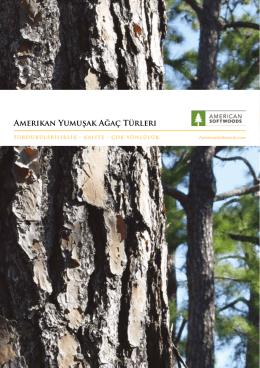 Amerikan Yumuşak Ağaç Türleri