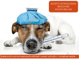kedi ve köpeklerde beslenme hastalıkları